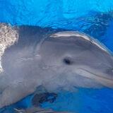 Zoomarine celebrates baby dolphin Neo
